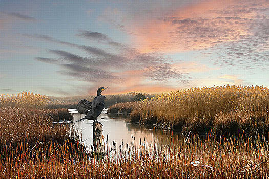 Cormorant At Sunset by Matthew Schwartz