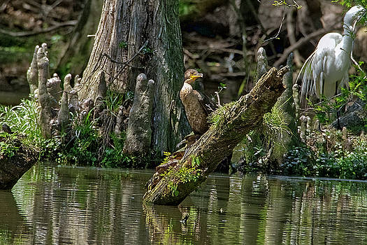 Cormorant Hanging Out by TJ Baccari