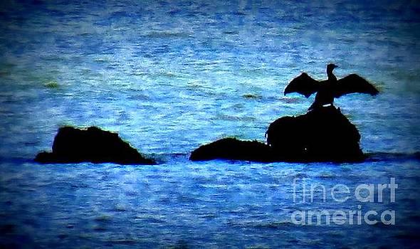 Cormorant In Silouhette by J J  Everson