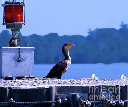 Cormorant by Patricia Griffin Brett