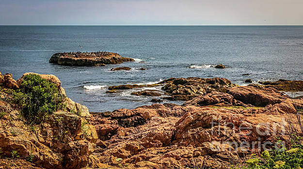 Cormorants and seagulls resting by Claudia M Photography