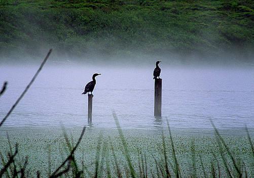 Cormorants by Art Shimamura