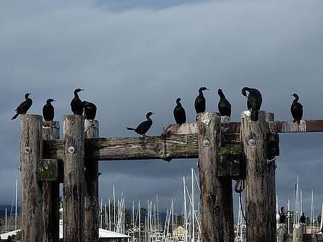 Cormorants by Ida Eriksen