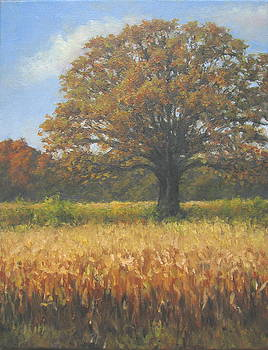 Corn and Oak by Stephen Howell