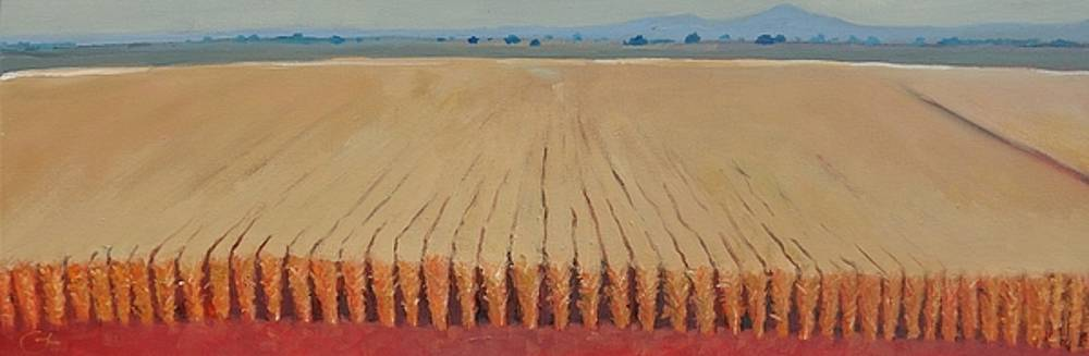 Corn Field by Gary Coleman
