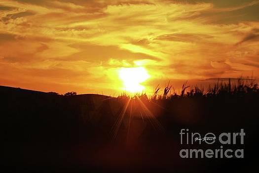 Corn field Sunset by Yumi Johnson