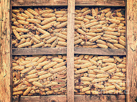 Delphimages Photo Creations - Corn for winter