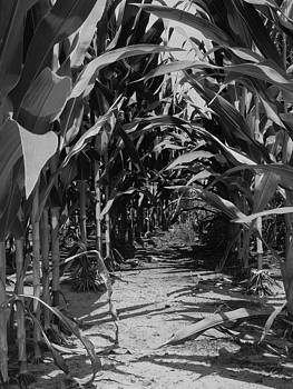 Corn by Jeff Montgomery