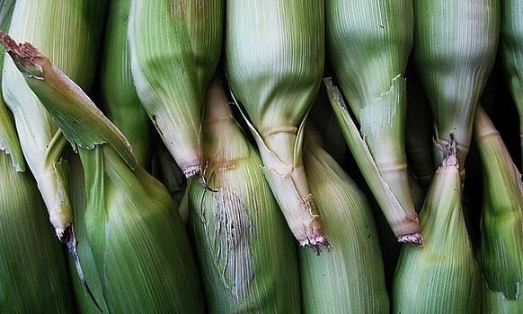 Corn by Maria Scarfone