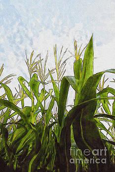 Landscape- Corn Maze by Feryal Faye Berber