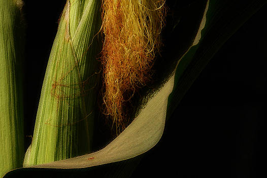 Linda Shafer - Corn Silk