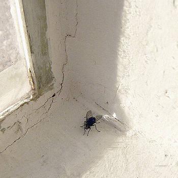 Stan  Magnan - Cornered Fly