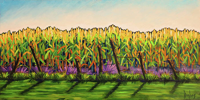 Cornfield Color by Kevin Hughes