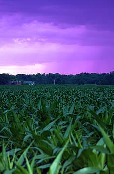 Cathy  Beharriell - Cornfield Landscapes Purple Rain