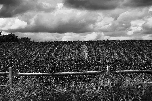 Cornfield On a Stormy Day by Samantha Boehnke