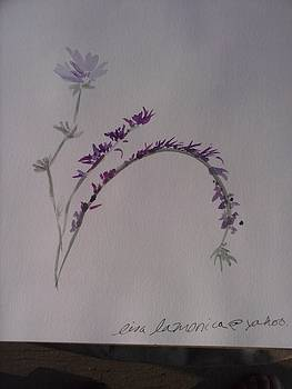 Cornflower blue by Lisa LaMonica