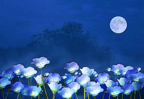 Valerie Anne Kelly - Cornflowers in the moonlight