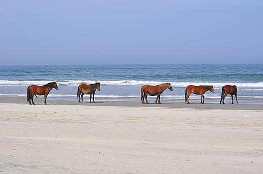 Corolla Horses by Jeff Moose