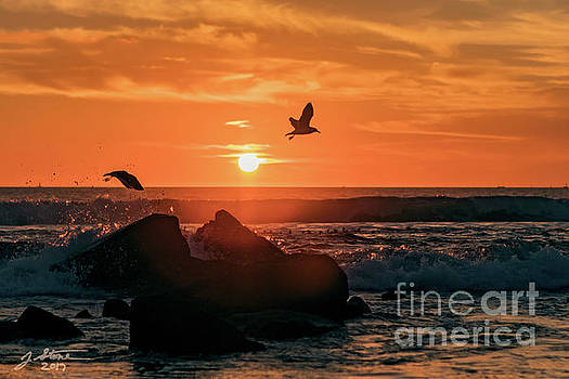 Coronado Sunset with Seagulls by Jeffrey Stone