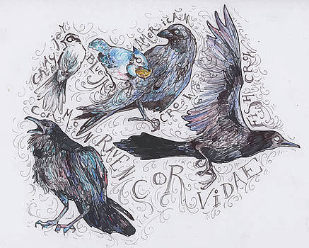 Corvidae of Maine by Hannah Dean