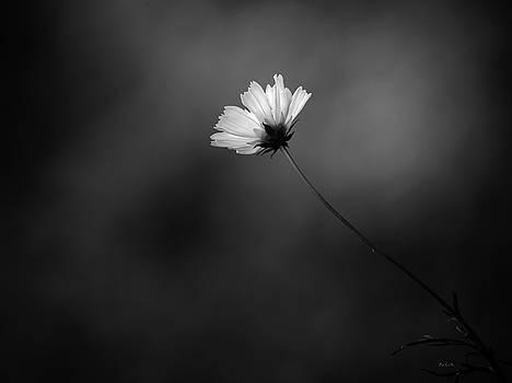 Cosmo Alone by Bob Orsillo