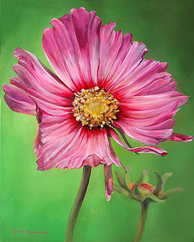 Cosmos by Dolemieux muriel