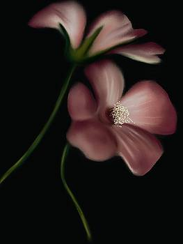 Pink Cosmos Flower by Michele Koutris