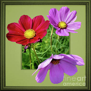 Cosmos Flower Peeking Out by Smilin Eyes  Treasures
