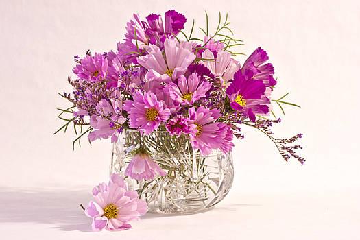 Sandra Foster - Cosmos - Summers Last Bouquet