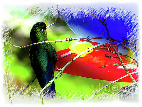 Costa Rican Hummingbird on Volcan Irazu  II by Al Bourassa