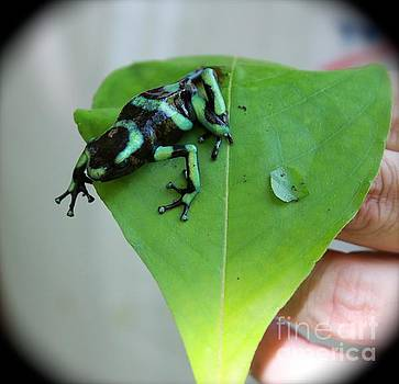Costa Rican Poison Dart Frog by The Art of Alice Terrill