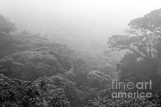 Costa Rican Rain Forest by Arnie Goldstein