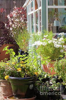Cottage garden in full bloom by Simon Bratt Photography LRPS