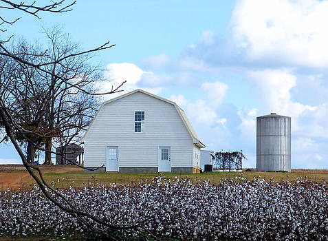 Cotton Patch White Barn by Rosalie Scanlon