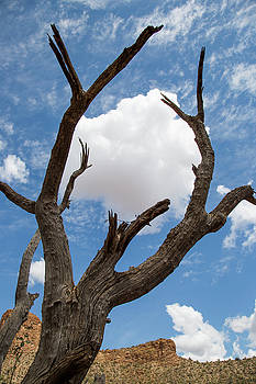 Cottonball Tree by Trish VanHousen
