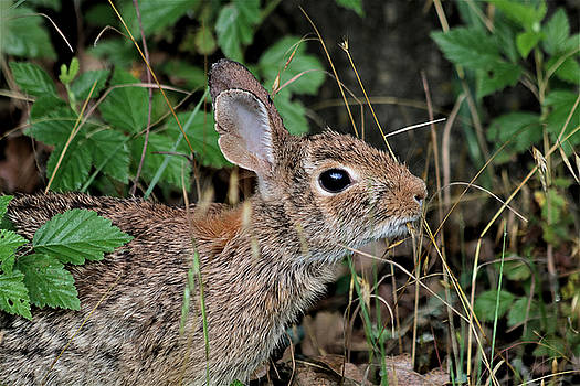 Cottontail Bunny Breakfast by Sheila Brown