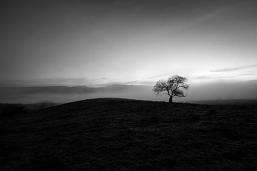 Cottonwood Dawn by Alexander Kunz