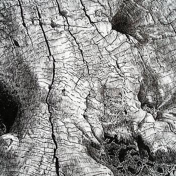 Cottonwood by Gary Gackstatter