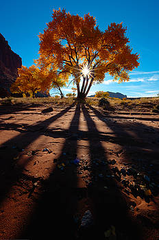Cottonwood Shadows by Jeff Clay