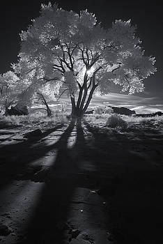 Cottonwood Shadows Part II by Jeff Clay