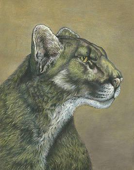 Cougar by Carol Gray