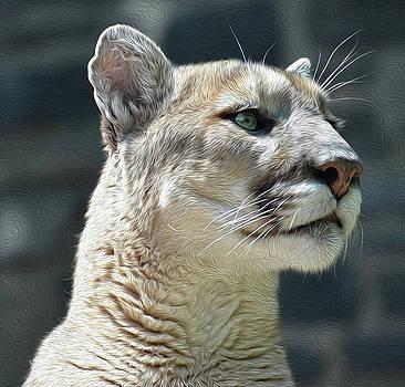 Cougar OP by Ronda Ryan