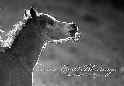 Count Your Blessings- Welsh pony foal by Susie Gordon
