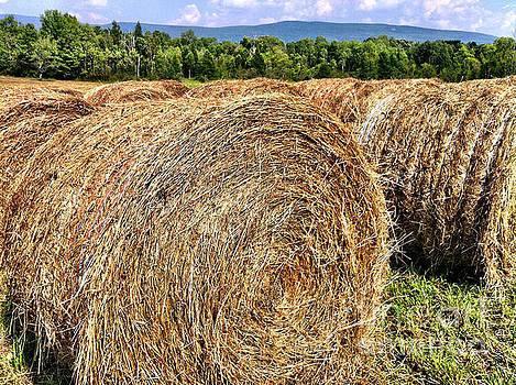 Onedayoneimage Photography - Country Bales