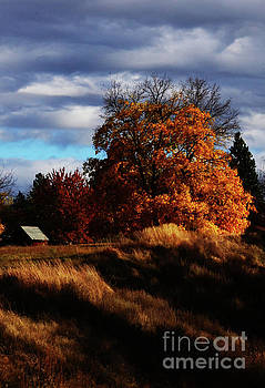 Country Life by Greg Patzer