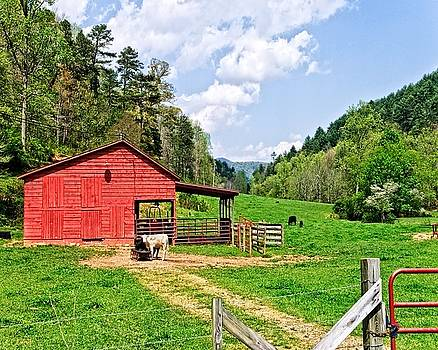 Country Life by Susan Leggett