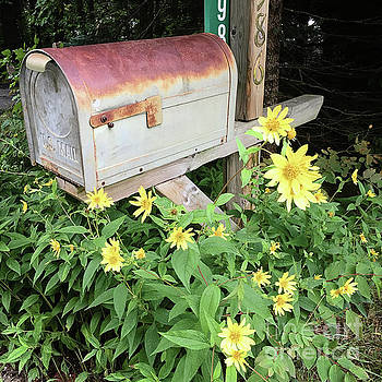 Country Mailbox by Laura Kinker