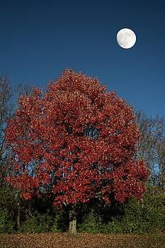 Randall Branham - Country Moon