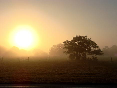 Country Morning Sunrise by Kimberly Camacho