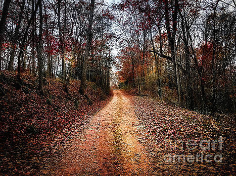 Country Road Fall Colors by Peggy Franz